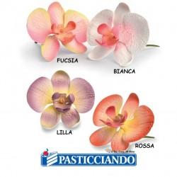 Vendita on-line di Orchidea in zucchero Modecor
