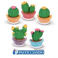 Vendita on-line di Cactus zucchero e gelatina Modecor