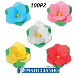 Selling on-line of Peonia in ostia per colore 100pz Floreal